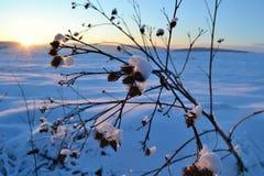 Sonnenuntergang über Winterlandschaft Lizenzfreie Stockfotos