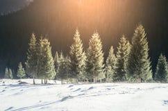 Sonnenuntergang über Winterlandschaft mit Kiefern Stockfoto