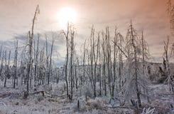 Sonnenuntergang über winterlichem Wald Stockfoto