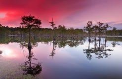 Sonnenuntergang über Zypressebäumen Stockfoto