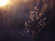 Am Sonnenuntergang Lizenzfreie Stockfotos