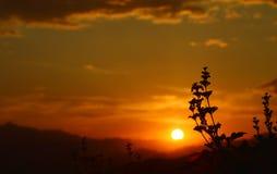Sonnenuntergang stockbilder