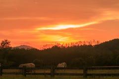 Sonnenuntergang Stockfotos