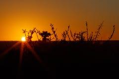 Sonnenuntergang in Addo mit Niederlassungen der Orange - Addo Landscape Stockfotografie