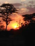 Sonnenuntergang in Afrika Stockfotografie
