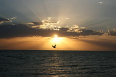 Am Sonnenuntergang allein fliegen Lizenzfreies Stockbild