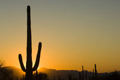 Sonnenuntergang in Arizona lizenzfreie stockbilder