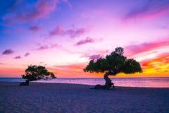 Sonnenuntergang Arubas Divi Divi Tree Stockbild