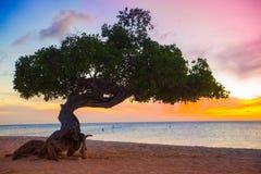 Sonnenuntergang Arubas Divi Divi Tree Lizenzfreie Stockbilder