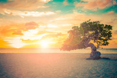 Sonnenuntergang Arubas Divi Divi Tree Stockfotografie