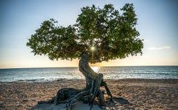 Sonnenuntergang Arubas Fofoti Lizenzfreie Stockfotos