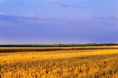 Sonnenuntergang auf dem Feld Lizenzfreies Stockbild