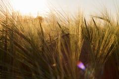 Sonnenuntergang auf dem Feld lizenzfreies stockfoto