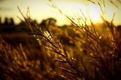 Sonnenuntergang auf dem Feld stockfoto