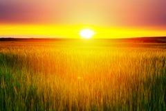 Sonnenuntergang auf dem Feld des Weizens Lizenzfreie Stockfotos
