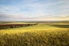 Sonnenuntergang auf dem Feld mit goldenem Roggen oder Weizen im Sommer mit einem bew?lkten Himmel landschaft stockbilder