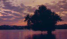 Sonnenuntergang auf dem Fluss Donau mit Baum reflektierte sich im Wasser Lizenzfreie Stockbilder