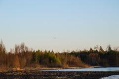 Sonnenuntergang auf dem Fluss Ein Vogel fliegt Stockfotos
