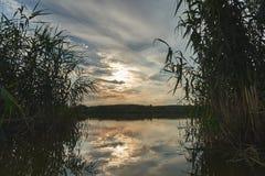 Sonnenuntergang auf dem Fluss ist durch die Schilfe sichtbar stockbild