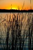 Sonnenuntergang auf dem Fluss mit dem Schattenbild des Schilfs Stockfotos