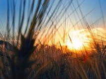 Sonnenuntergang auf dem Gebiet lizenzfreie stockfotos