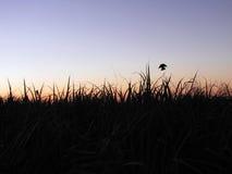 Sonnenuntergang auf dem Gebiet Stockbilder