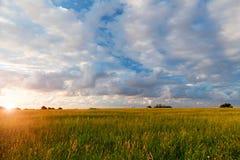 Sonnenuntergang auf dem Gebiet im Sommer Lizenzfreie Stockbilder