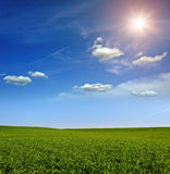 Sonnenuntergang auf dem grünen Feld des Weizens, des blauen Himmels und der Sonne, weiße Wolken. Märchenland Stockbild
