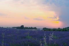 Sonnenuntergang auf dem Lavendelgebiet Lizenzfreies Stockfoto
