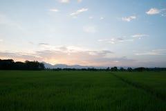 Sonnenuntergang auf dem Reisgebiet, Thailand Lizenzfreie Stockfotos