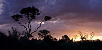 Sonnenuntergang auf dem Savannas Stockfotografie