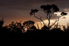 Sonnenuntergang auf dem Savannas Lizenzfreie Stockfotos