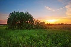 Sonnenuntergang auf dem Sommergebiet Stockbild