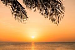 Sonnenuntergang auf dem Strand durch Schattenbild der Palme stockbild