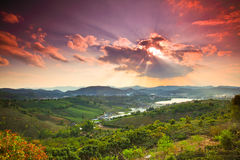 Sonnenuntergang auf dem Teegebiet 3 Lizenzfreie Stockfotografie