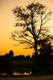 Sonnenuntergang auf dem ukrainischen See mit großem schwarzem Baum Stockbild
