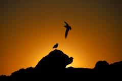 Sonnenuntergang auf den Felsen Stockfotos