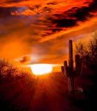 Sonnenuntergang auf der Arizona-Wüste lizenzfreie stockfotos