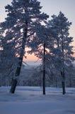 Sonnenuntergang auf ein Fallung Lizenzfreie Stockfotos