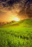 Sonnenuntergang auf einem Feld Lizenzfreie Stockfotografie