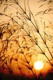 Sonnenuntergang auf einem Weizengebiet Stockbild