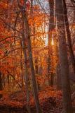 Sonnenuntergang auf einer bewaldeten Spur während des Herbstes Lizenzfreies Stockfoto