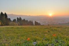 Sonnenuntergang auf einer Wiese Stockfotos
