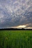 Sonnenuntergang auf Feld Lizenzfreies Stockbild