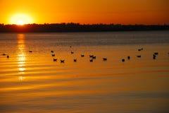 Sonnenuntergang auf Fluss Stockbilder