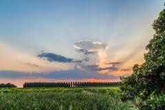 Sonnenuntergang auf grünem Ackerland in Italien Stockbild