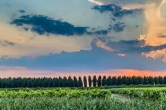 Sonnenuntergang auf grünem Ackerland in Italien Lizenzfreie Stockbilder