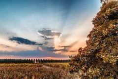 Sonnenuntergang auf grünem Ackerland in Italien Stockbilder