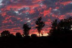 Sonnenuntergang auf Hügel von Eichen gegen Hintergrundbeleuchtung Lizenzfreie Stockfotografie