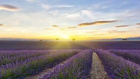Sonnenuntergang auf Lavendelfeld mit zwei Bäumen und gelber Sonne Stockfoto